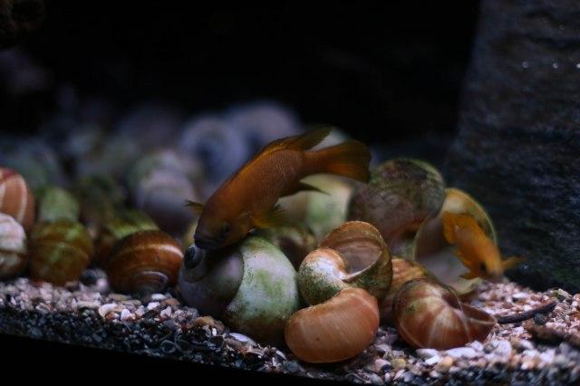 Aquarium12017.0-1