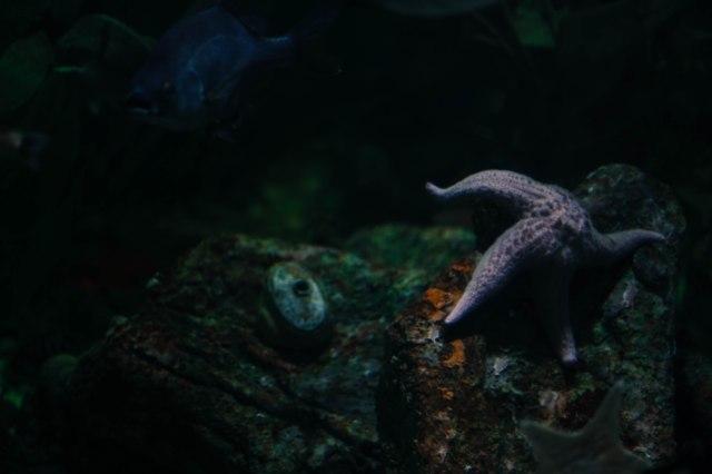 Aquarium12017.0-11