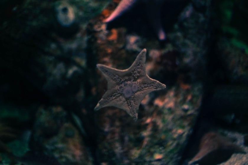 Aquarium12017.0-12