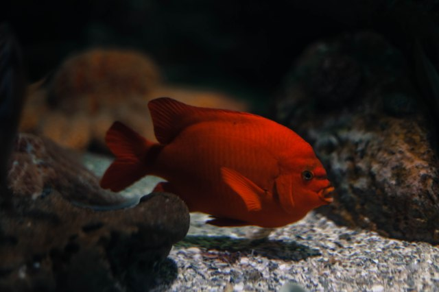 Aquarium12017.0-13