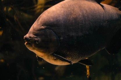 Aquarium12017.0-15