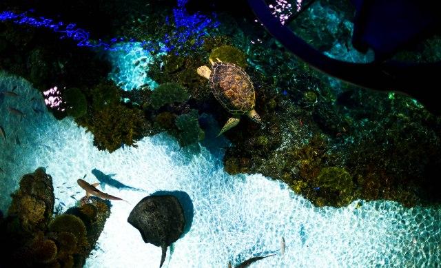 Aquarium12017.0-17