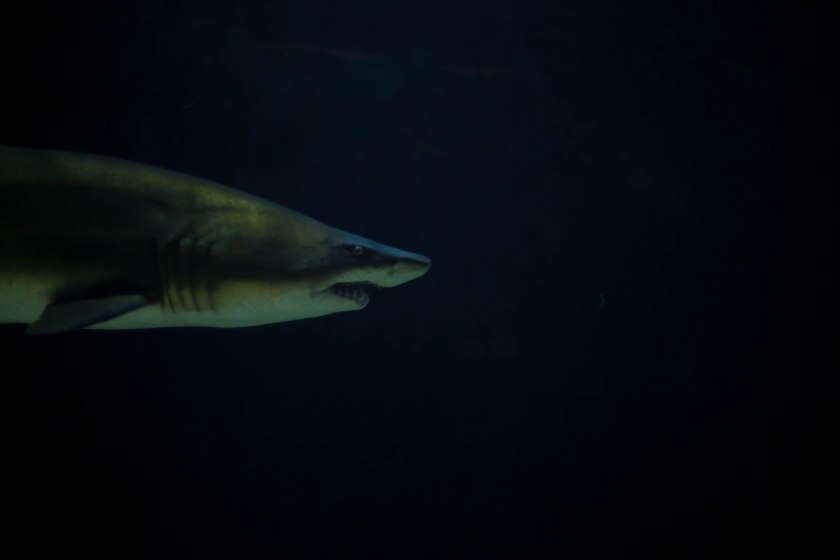Aquarium12017.0-19