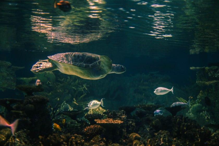 Aquarium12017.0-22