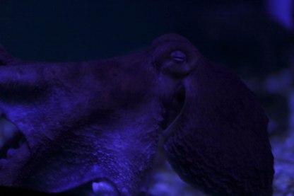 Aquarium12017.0-5