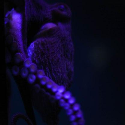 Aquarium12017.0-8