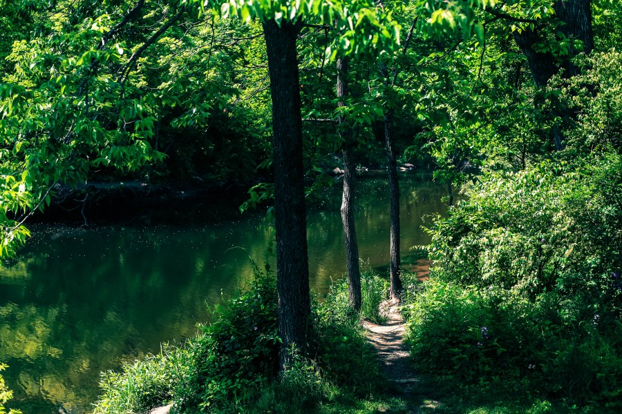 river, forest, woods, nature, trees, nature photography