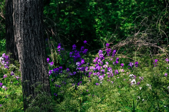 flowers, brambles, trees, forest